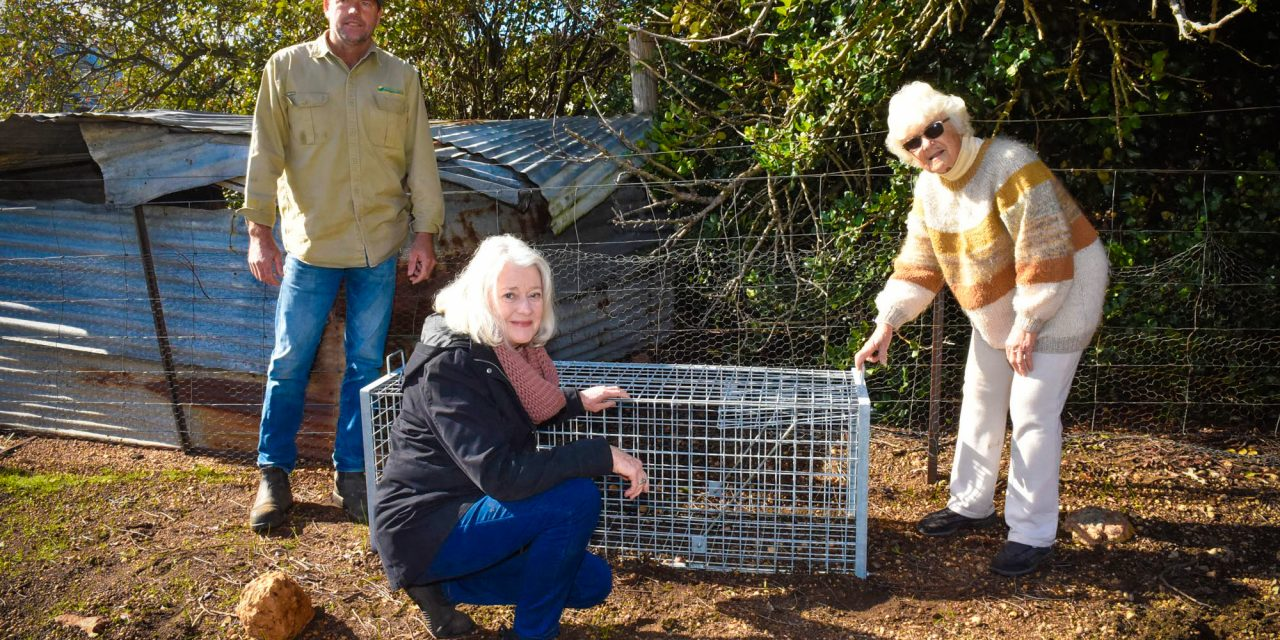Biosecurity outfoxing feral pests