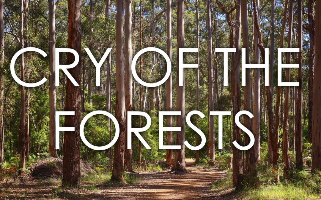 John Butler to star at event for WA's forests – showcasing acclaimed film Cry of the Forests