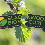 "Blackwood Biosecurity ""in chaos"""