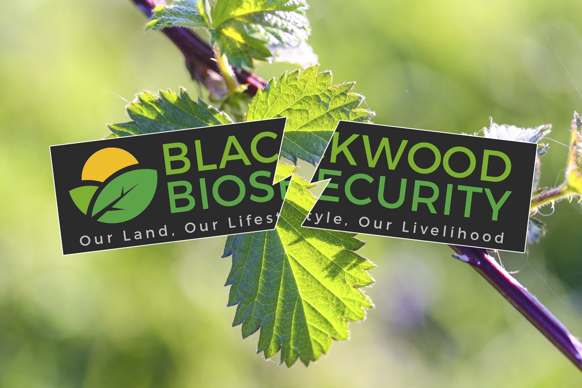"""Blackwood Biosecurity """"in chaos"""""""